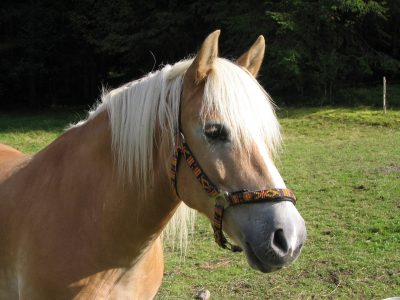Summer Fun for Kids – Redwings Horse Sanctuary